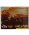 Kinder Houten bouwpakket Pteranodon